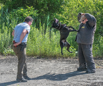James Neiss/staff photographer  Lockport, NY - Niagara County Sheriff Lt. Jimmy Hildreth, head k-9 trainer,  took advantage of the cooler morning temperatures on Tuesday to dress up in a safety suite to work with Deputy Rich Bull and his dog Chief in an abandoned parking lot in Wrights Corners.