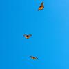 190828 Butterfly Enterprise 2