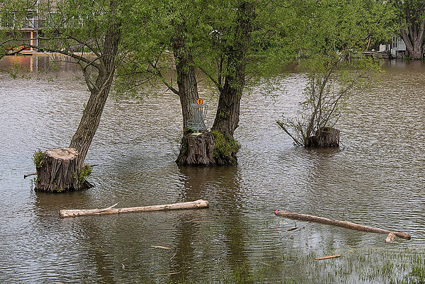 James Neiss/staff photographer <br /> Wilson, NY - The water challenge around the  #1 Disk Golf hole at Wilson Tuscarora State Park was definitely not planned for, it's just one of the many problems caused by rising Lake Ontario water levels.