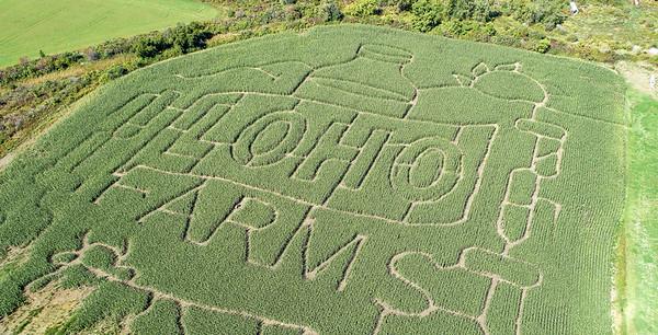190919 Cambria Corn Maze 1
