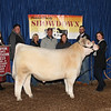 Champion Shorthorn Steer