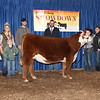 4th Overall Heifer