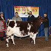 Reserve Champion Shorthorn Steer