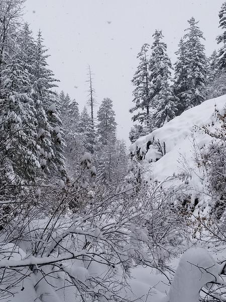 Bear Canyon<br /> White Pass, WA