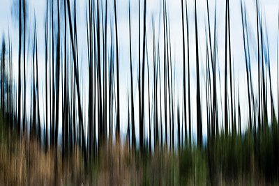 DA105,DP,Rebirth - Abstract of new growth among the charred remains of a forest fire