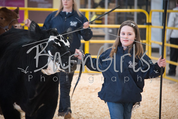 2019 Jr Beef Expo - Conformation
