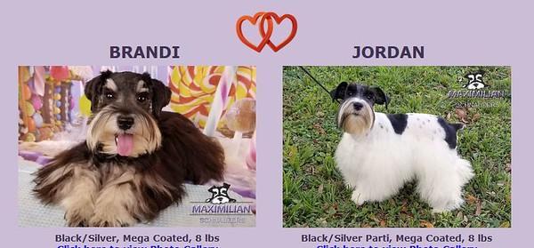 Brandi & Jordan Puppies, DOB 12/24/2019