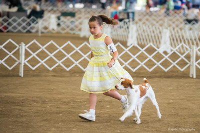 Winners Dog Brigade's New Sheriff in Town owner handled by Madison GardeaWya