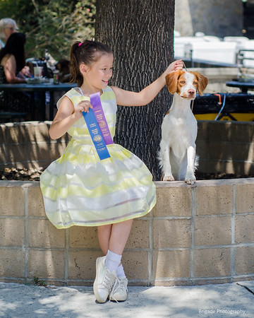 Wyatt, Brigade's New Sheriff In Town with Owner Handler Madison Gardea win Winners Dog, Judge Laurie King Telfair