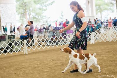 Saturday Winners Dog and BOS Handler KayCee