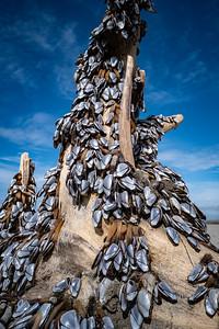 Grayland Beach, Wa