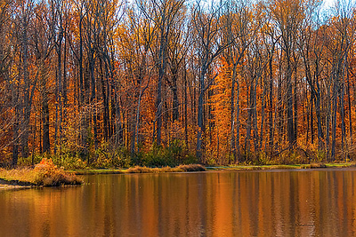 reflections-in-a-lake-in-fall-deb-henman