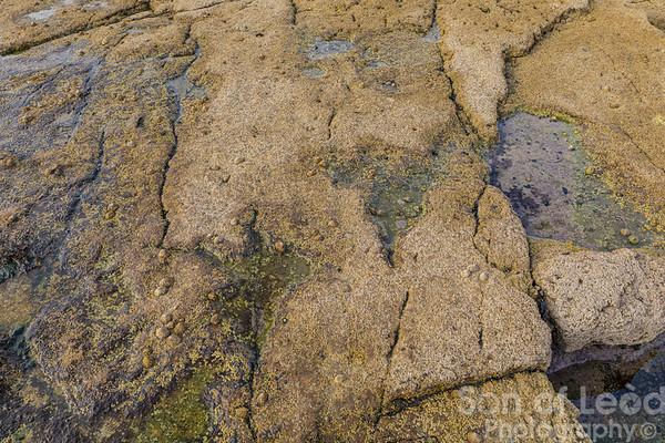 Dinosaur footprints at Duntulm