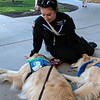 Mercy and Tobias Comfort Dogs at Miami Valley Hospital.