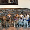 LCC K-9 Comfort Dogs Serving in Dayton, Ohio