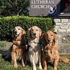 Barnabas, Tobias, and Bekah Comfort Dogs at Emmanuel Lutheran Church in Dayton, Ohio