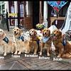 Comfort Dogs - Dayton, Strong