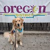 Tobias Comfort Dog - Oregon District, Dayton, Ohio