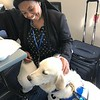 Jared Comfort Dog (Holy Cross Lutheran Church and School- Fort Wayne, Indiana) Comforting a FEMA Worker at Dayton Children's Hospital