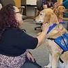Cubby Comfort Dog at the El Paso County Judge's Office - El Paso, Texas