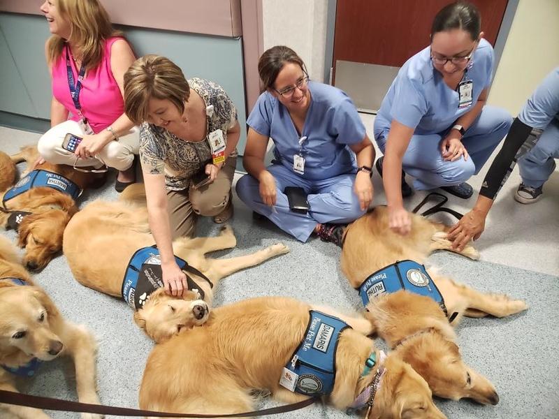 Ruthie, Damaris, Abner, Martha Comfort Dogs comforting staff at Del Sol Medical Center - El Paso, Texas