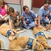 Ruthie, Damaris, Abner, Martha Comfort Dogs comforting staff at Del Sol Medical Center - El Paso, Texas