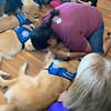 LCC K-9 Comfort Dogs in El Paso, Texas at Zion Lutheran Church