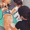 Joy Comfort Dog at Vigil at Walmart in El Paso, Texas Where Shootings Took Place