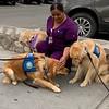 LCC K-9 Comfort Dogs comforting staff at Del Sol Medical Center in El Paso, Texas
