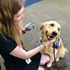 Joy Comfort Dog (Gloria Dei Lutheran Church- Houston, Texas) With a Friend at the El Paso Airport
