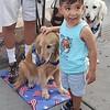 Cubby Comfort Dog - El Paso, Texas