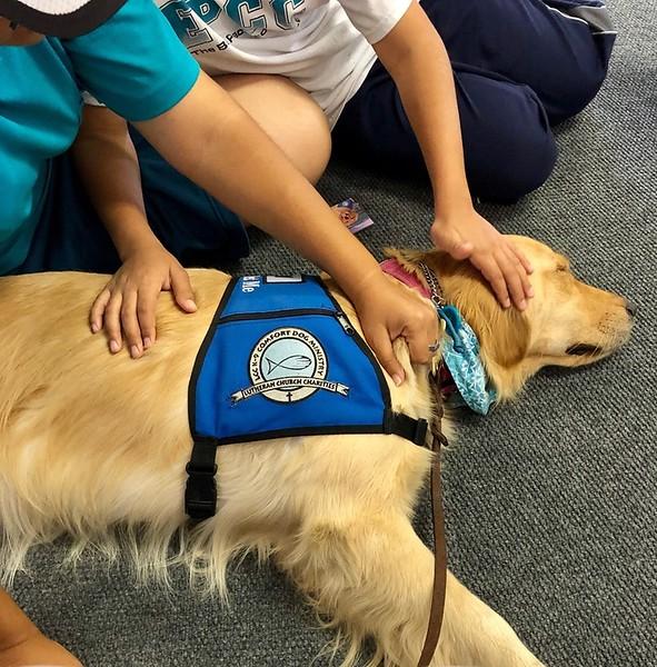 Joy Comfort Dog Making New Friends at Ysleta Lutheran Church - El Paso, Texas