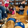 Joy and Phoebe Comfort Dogs in El Paso, Texas