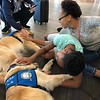 LCC K-9 Comfort Dogs Comforting in El Paso