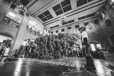 The Christmas tree is brought into the Purdue Memorial Union on December 2, 2019