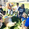 LCC K-9 Comfort Dogs at Central Park being present for those affected by the Saugus HS Shooting- Santa Clarita, CA