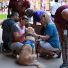 Abner Comfort Dog Serving in Midland, Texas