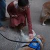 Phoebe Comfort Dog in Midland, Texas