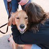 LCC K-9 Comfort Dog at the UTPB STEM Academy Welcoming Students