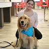 Elijah Comfort Dog with a Friend at Music City Mall