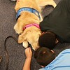 Phoebe Comfort Dog with a Friend at Blackshear Magnet Elementary