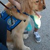 Gabriel Comfort Dog at the UTPB STEM Academy Welcoming Students