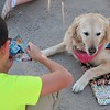 Phoebe Comfort Dog at the UTPB STEM Academy Welcoming Students
