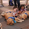 LCC K-9 Comfort Dogs with Friends at Music City Mall