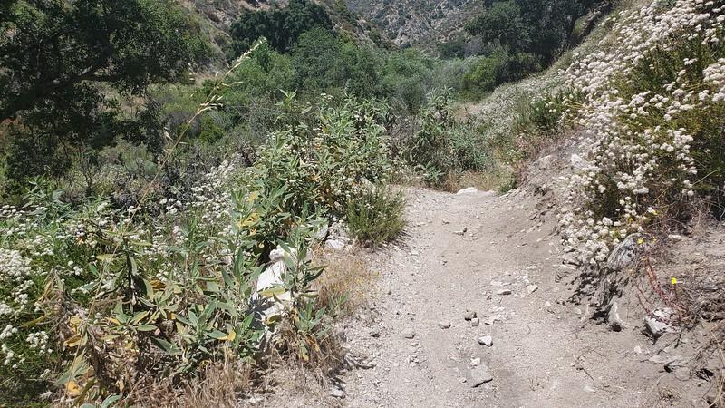 USAC, Blue Bug trail