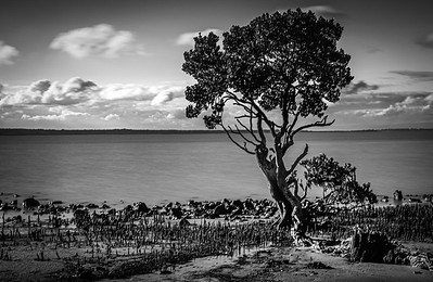 Tenby Point Tree