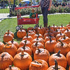 Levi and Jake Burns with mom Cara look over a sea of pumpkins waiting to be carved.