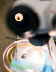 Microscope Image 9254