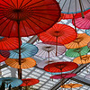 Parasols at Sherman Gardens