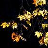 Fall cover photo B